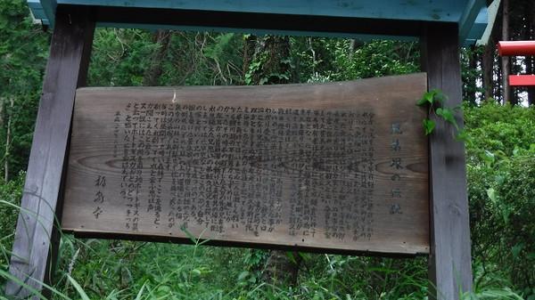 Tamakai013