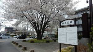 Sakura1803